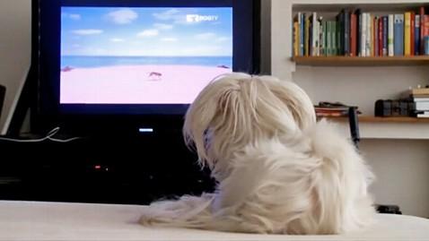 DOGTV canal para tu mascota