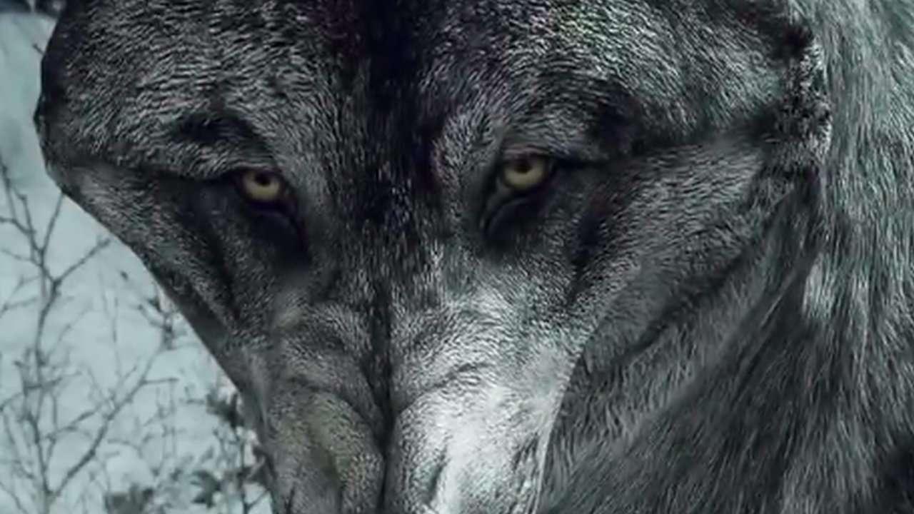 Call of Duty Ahora Trae Un Lobo Con Éste Skin Descargable (vídeo)